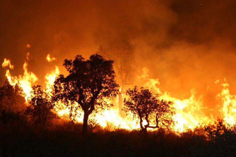 57 incendies enregistrés à Tizi-Ouzou durant la journée de mercredi — Canicule